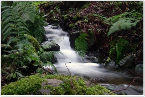foresta-el-cedro-hermigua-la-gomera