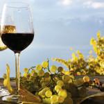 vino-bio-1000x600