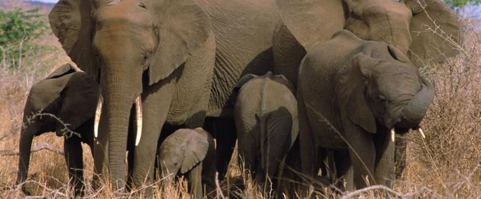 Sudafrica Kruger National Park