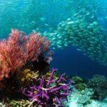 branco-di-pesci,-pesci,-fondale-marino,-coralli-159622