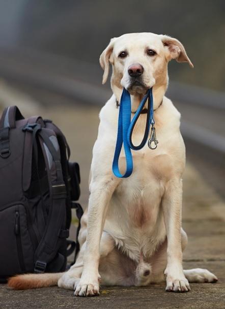 In viaggio con cane e gatto come organizzare una vacanza for Quali compagnie aeree portano animali domestici in cabina