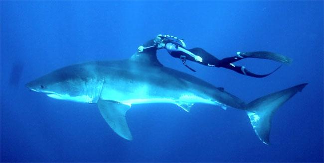 Squali sono davvero il terrore dei mari tgtourism - Bagno con gli squali sudafrica ...