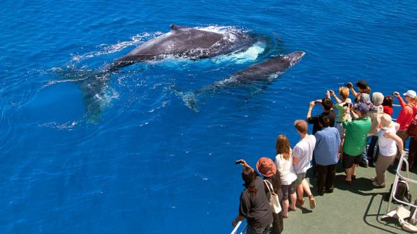 Balene_in_australia_barca