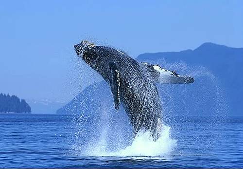 balena-baja-california