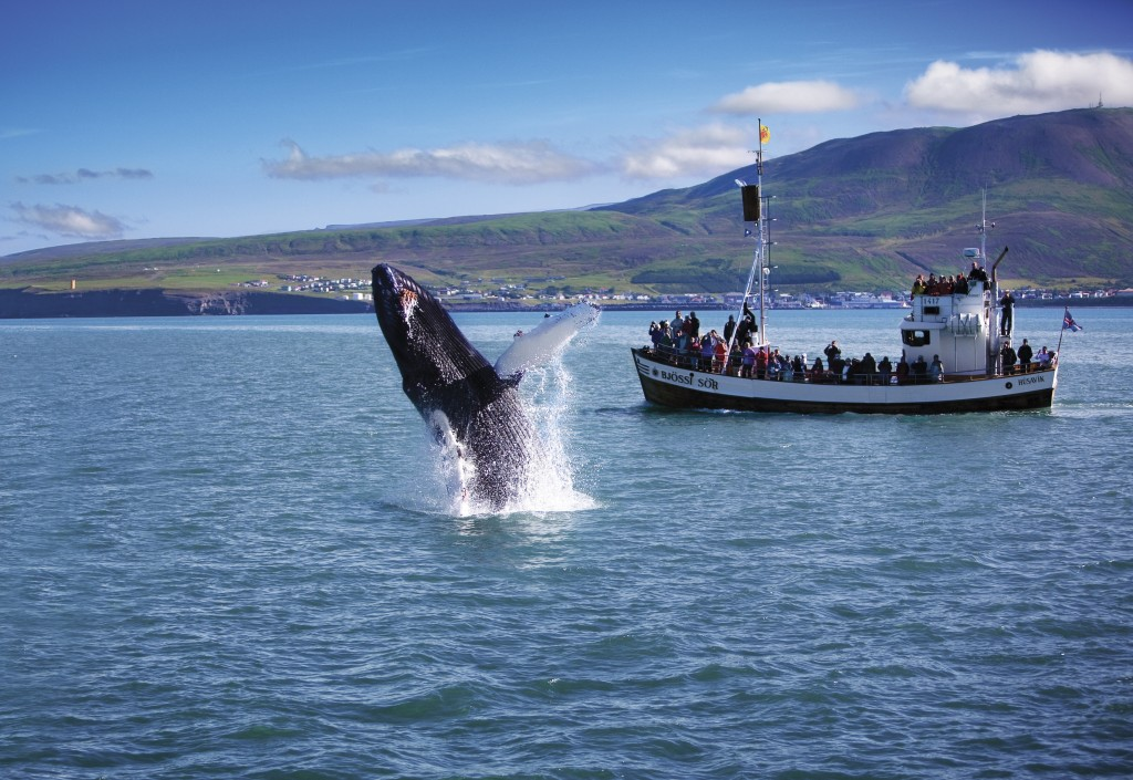 whale husavik