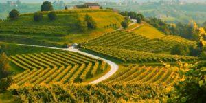 La strada del Prosecco, tra le colline di Conegliano e Valdobbiadene