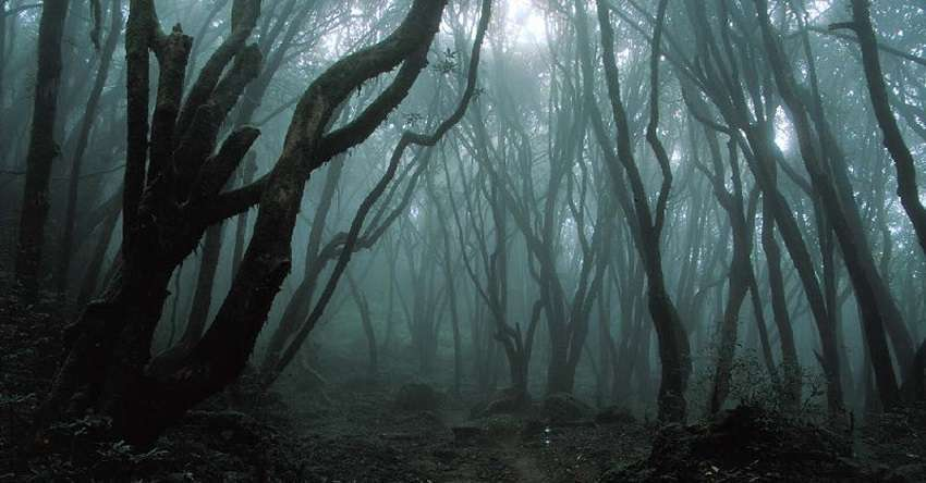 foresta-dei-suicidi-aokigahara