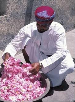 Coltivatore petali rose Oman