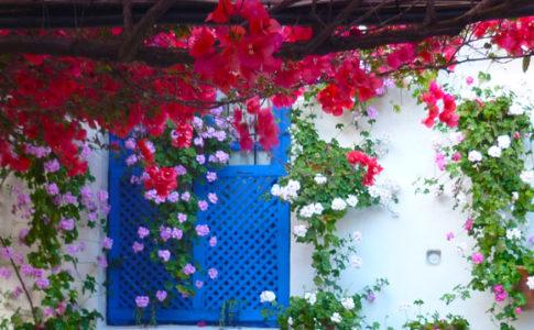 """Fiori nei """"patios"""" di Córdoba, Spagna"""