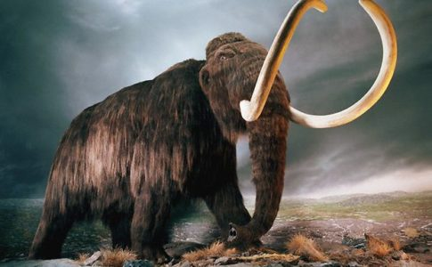 Mammut lanoso