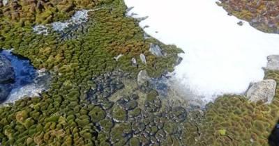 Antartide più verde