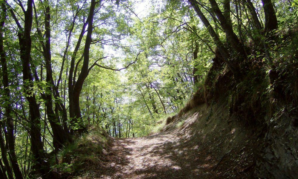 settore forestale