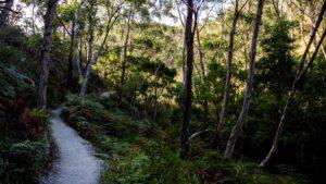 Cleland conservation park, South Australia