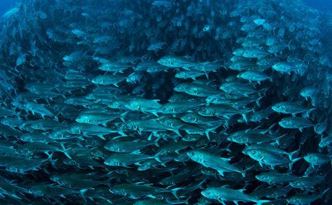 Sfondo marino, banner Ocean Conference © Edwar Herreño