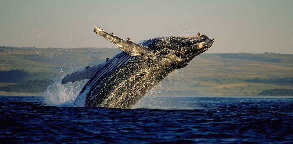 Tra le balene avvistate nel Western Cape