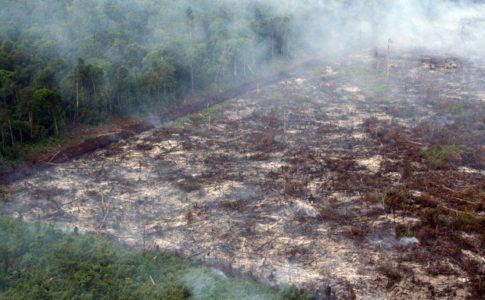 Piogge e cambiamenti climatici, che minacciano le torbiere tropicali
