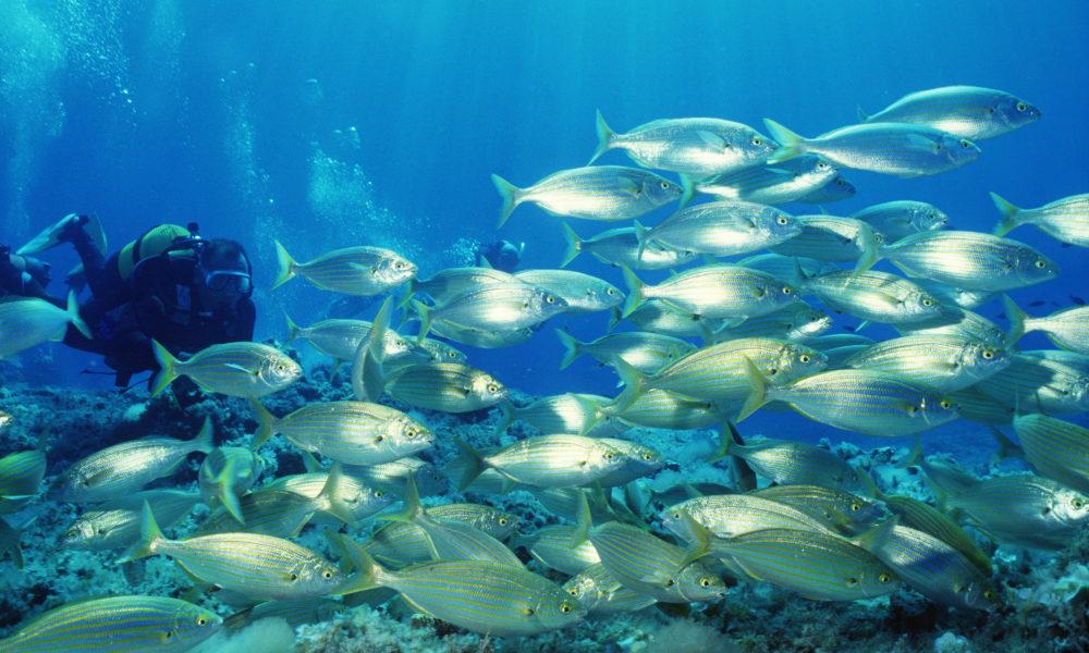 Sfondo marino Formentera