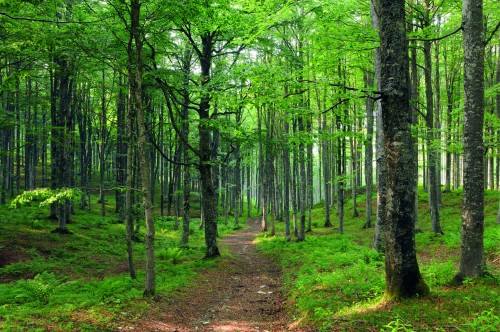 Foresta in cui praticare il forest bathing