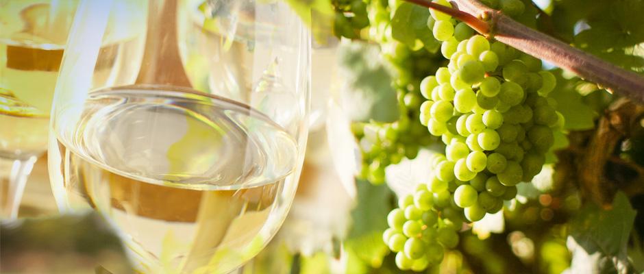 Txakoli, vino dei Paesi Baschi
