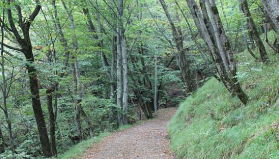 Carta di Bagno di Romagna: per una gestione forestale sostenibile