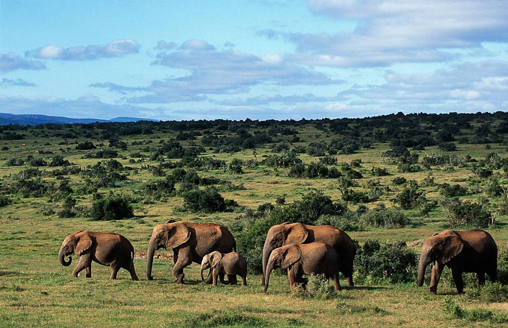 Addo Elephant National Park, Sudafrica