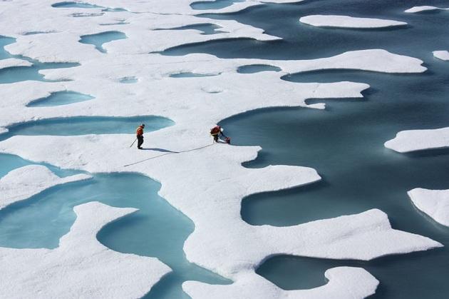 Banchisa polare