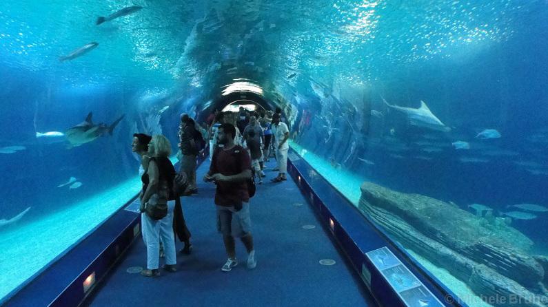 L 39 infinita offerta artistica e culturale di valencia for Oceanografico valencia