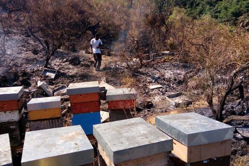 Incendio sul Vesuvio: tornano le fiamme a Torre del Greco