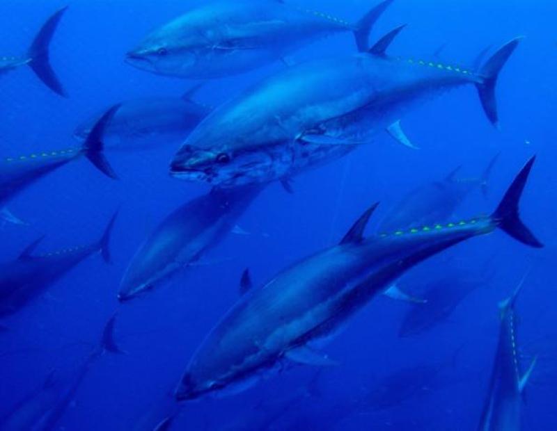 Tuna Tour Experience