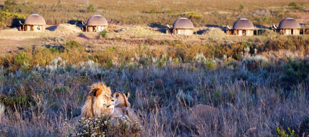 Gondwana Game Reserve, Sudafrica