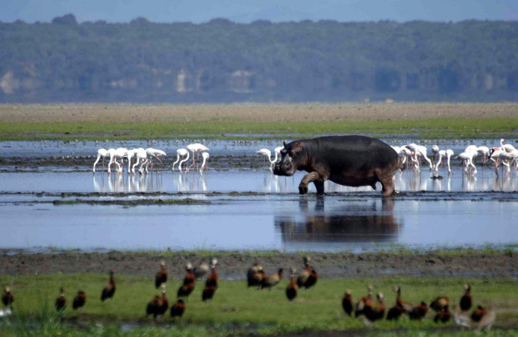 iSimangaliso Wetland Park, Sudafrica