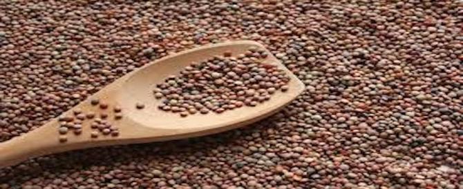 lenticchie di castelluccio