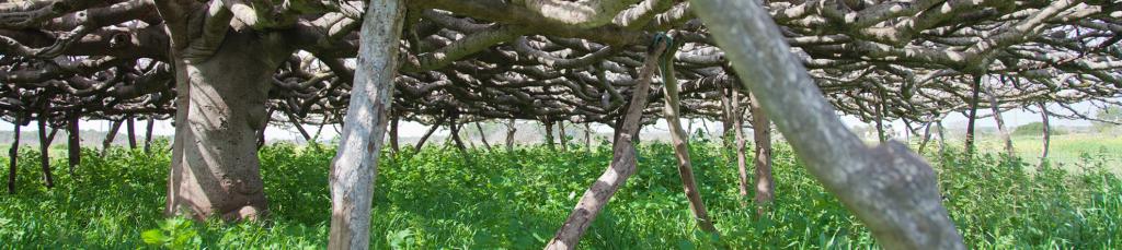 Percorsi Verdi, Formentera