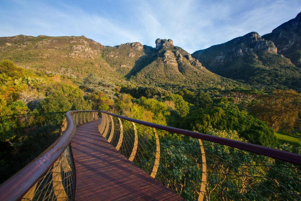 Kirstenbosch Centenary Tree Canopy Walkway, Sudafrica