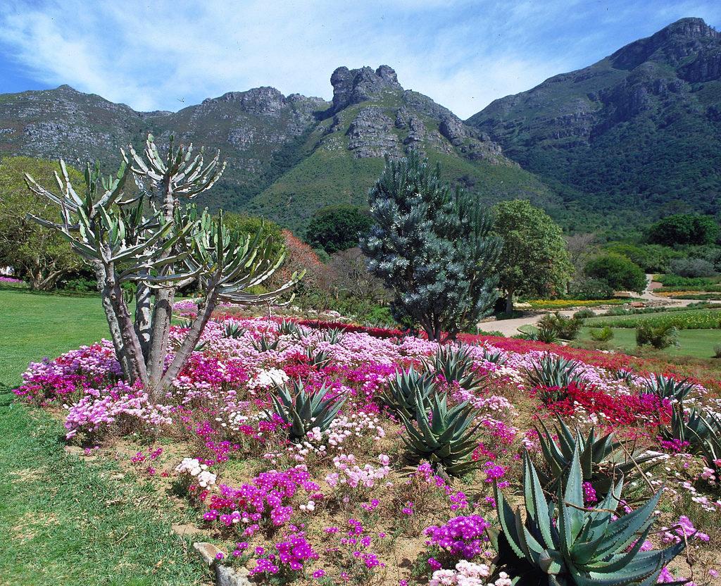 Kirstenbosch Gardens, Sudafrica