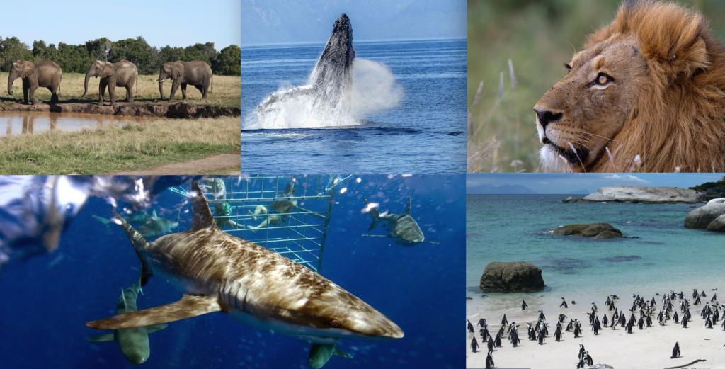 Animali in Sudafrica