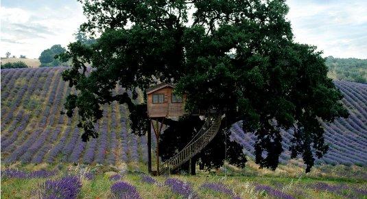 Aspettare il nuovo anno in una location originale ecco la - Airbnb casa sull albero ...