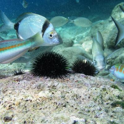 Il paradiso sottomarino della Tunisia