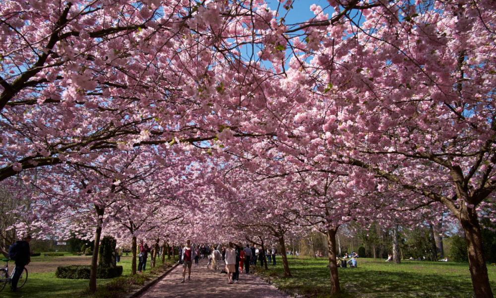 Ponti di primavera in Danimarca: eventi, itinerari e città da scoprire