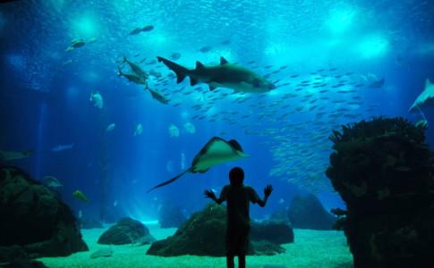I 10 acquari più belli nel mondo