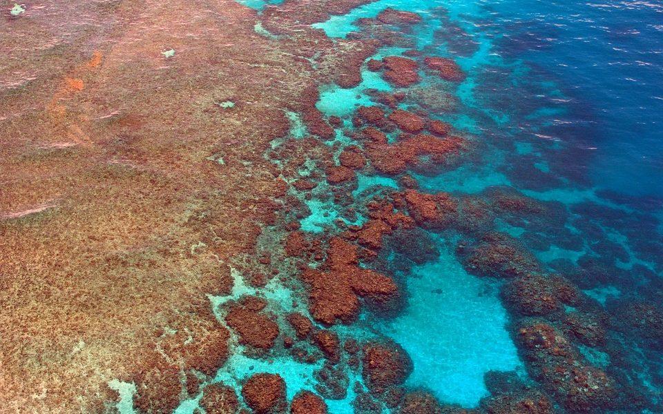 Grande barriera corallina, Australia stanzia 60 mln per la sua salvaguardia