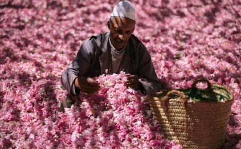 Uno spettacolo rosa: cosa vedere in Oman in primavera