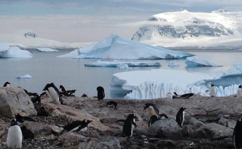 Scoperti in Antartide mega-colonie di oltre un milione e mezzo di pinguini