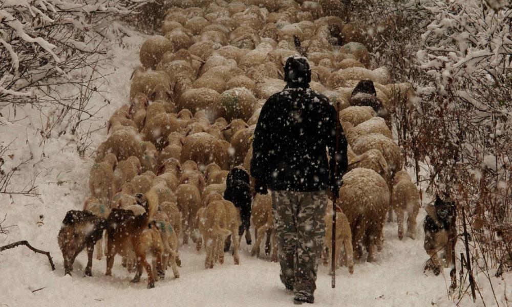 Unesco, l'Italia candida la Transumanza a patrimonio dell'umanità
