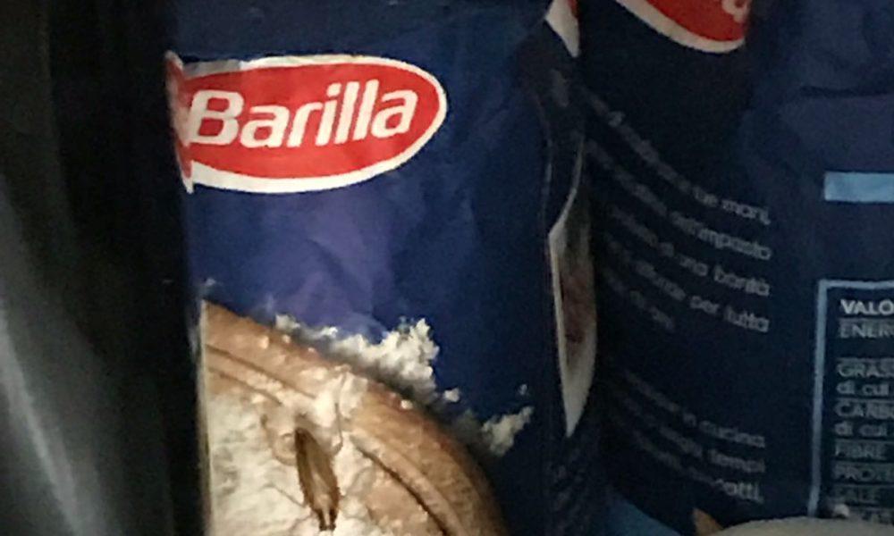 Roma, chiuso ristorante per blatte e scarafaggi a Piazza Vittorio