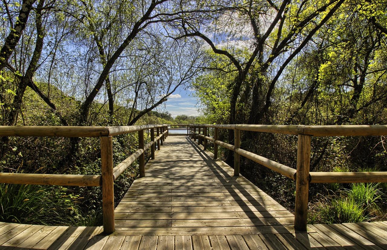Parco Doñana, Andalusia
