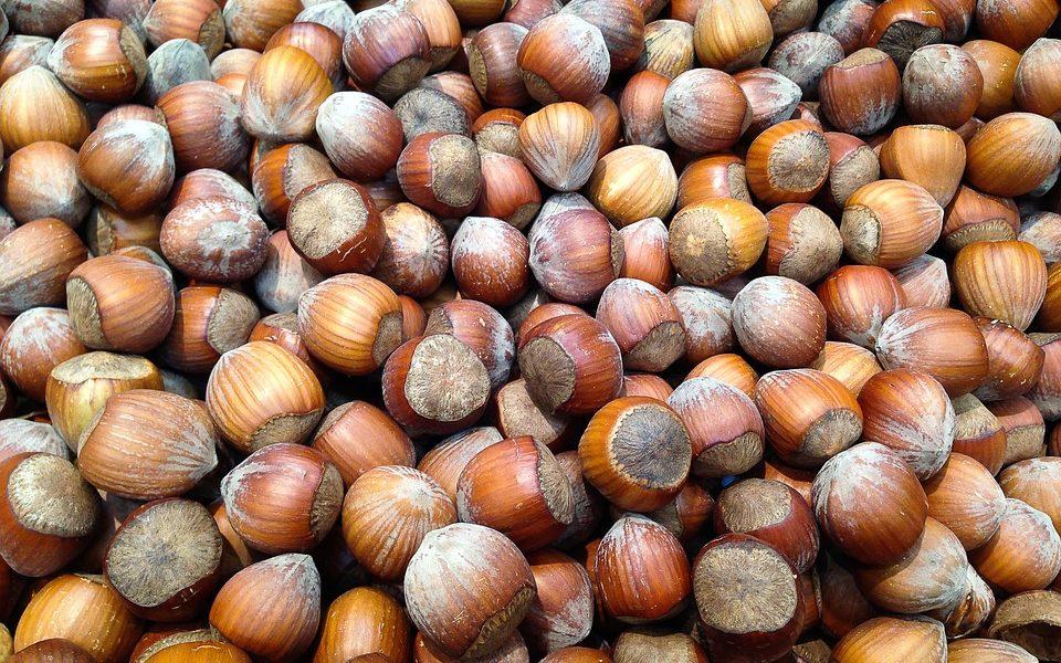 Progetto Nocciola Italia, il piano della Ferrero per aumentare le piantagioni