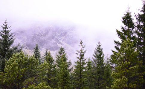 L'obiettivo dell'Islanda: ripristinare le foreste distrutte dai Vichinghi