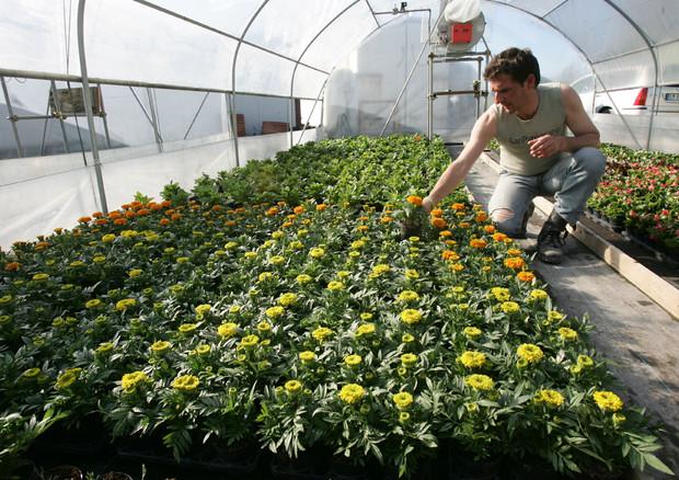 Euroflora: fiori e piante in cucina - TgTourism