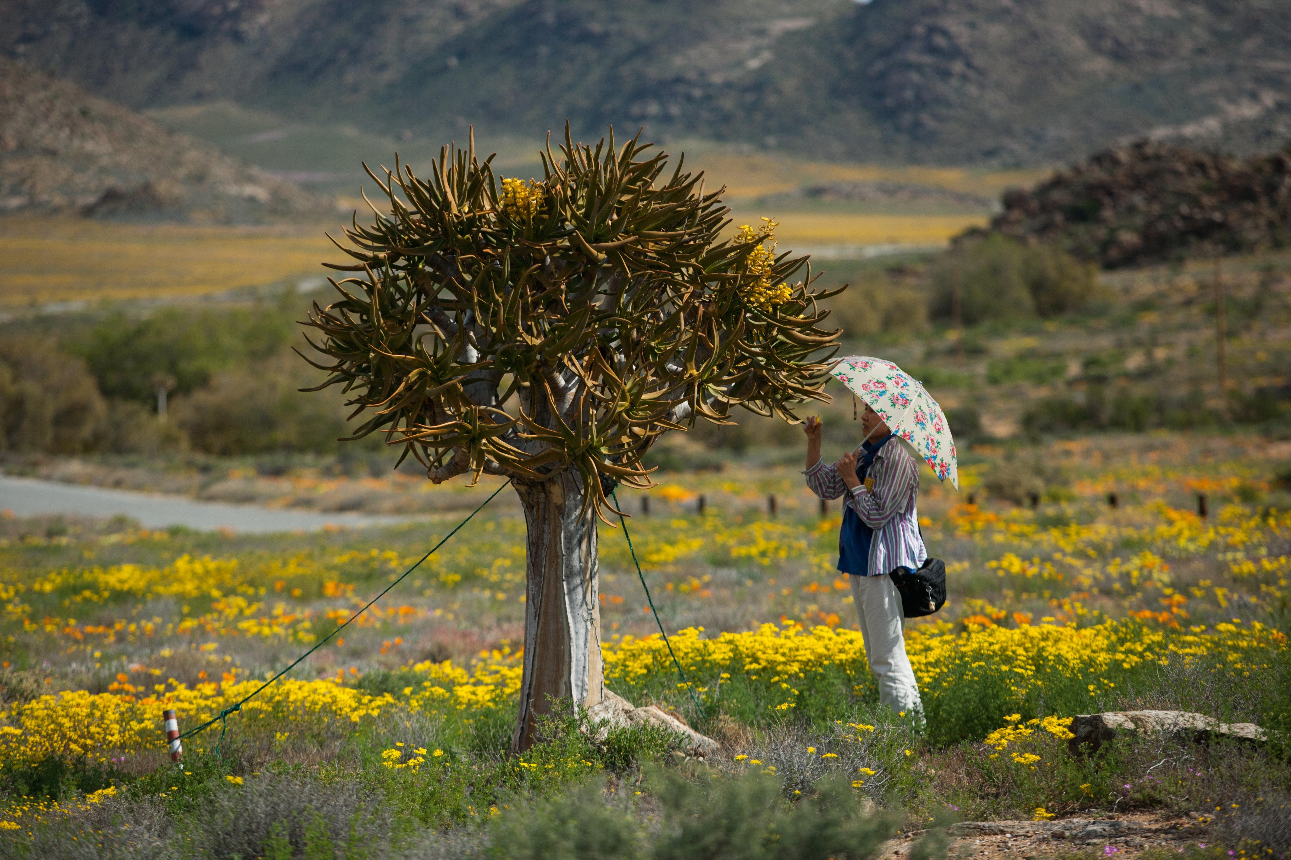 In Sudafrica lo spettacolo del deserto che fiorisce - TgTourism